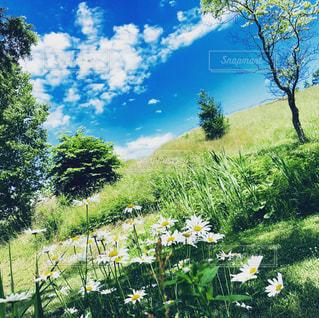 野原の黄色い花の写真・画像素材[2260939]
