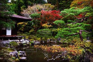 荘厳な京紅葉の写真・画像素材[1608304]
