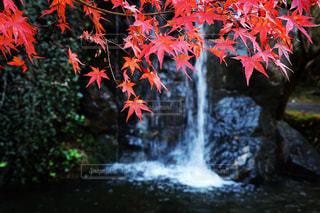 紅葉,滝,渓流,岡山県,日本の風景,名勝地,岡山観光,日本の美しい風景,大人旅スポット,一人旅スポット,日本の観光名所,旅photo,宇甘渓