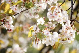 花,白,花束,草木,ブロッサム