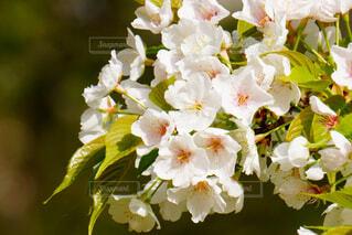 花,白,花束,草木,ブルーム