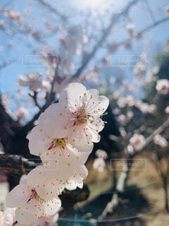 公園,花,春,草木,ブルーム,ブロッサム