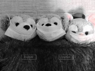 ぬいぐるみの動物のグループの写真・画像素材[1072797]