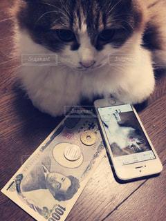 猫だって小判の写真・画像素材[1078760]