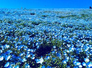 限りなくブルーの写真・画像素材[1104842]