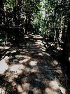 フォレスト内のツリーの写真・画像素材[1116834]