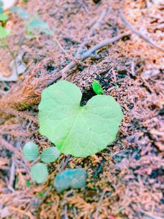 近くに緑の葉のアップの写真・画像素材[1117099]