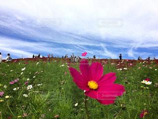 花は緑豊かな緑のフィールドに立っています。の写真・画像素材[1124117]