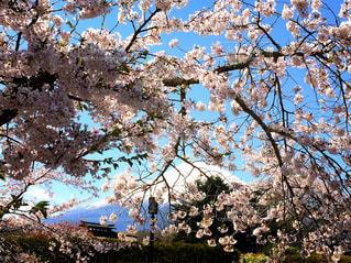 富士は日本いちの山の写真・画像素材[1126881]