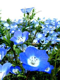 近くの花のアップの写真・画像素材[1144990]