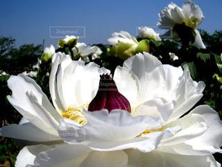 近くの花のアップの写真・画像素材[1145083]
