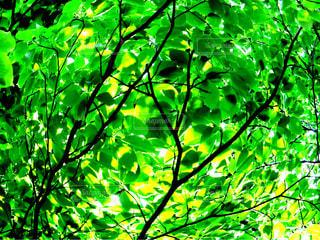 木のぼやけた写真の写真・画像素材[1158582]