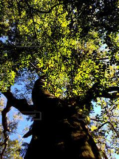 ツリーの前に立っている人の写真・画像素材[1158606]