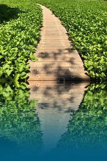 庭園の緑の植物の写真・画像素材[1164358]