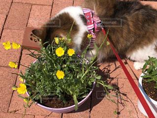 花の上の猫の写真・画像素材[1164365]