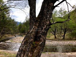 初夏の森の写真・画像素材[1166721]