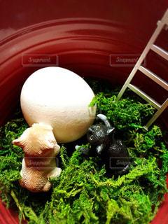 ブロッコリーと食品のボウルの写真・画像素材[1188329]