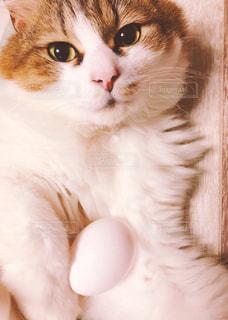 卵が先か猫が先か?の写真・画像素材[1188597]