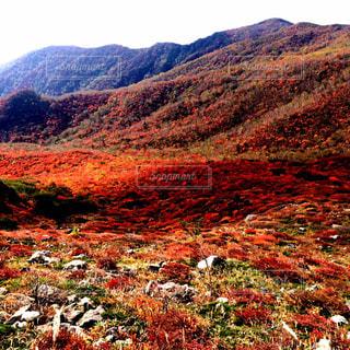 真っ赤な秋の写真・画像素材[1196896]