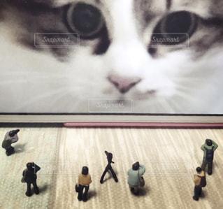 カメラを見ている猫の写真・画像素材[1217120]
