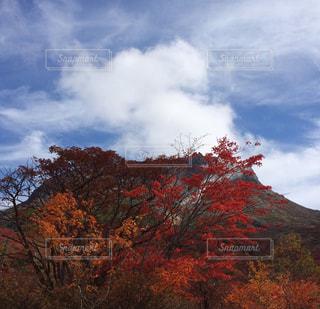 秋空と紅葉の写真・画像素材[1217140]