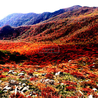 背景の山のフィールドの写真・画像素材[1407034]