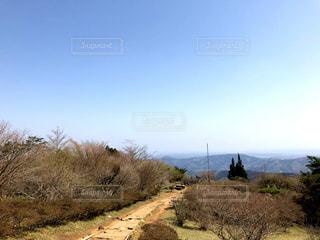 丘の木のパスの写真・画像素材[1407088]