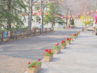 カナダの街並みの写真・画像素材[1557010]