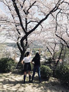 自然,空,春,桜,お花見,草木,大阪府,山腹,柏原市