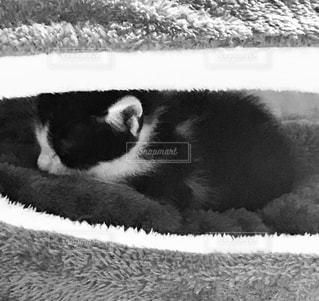 ベッドの上で横になっている子猫の写真・画像素材[1132648]