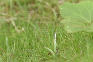 雨,緑,水,葉っぱ,水滴,草,雨上がり,梅雨