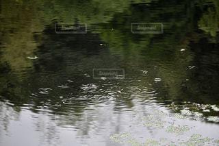 アウトドア,雨,水,池,バス,波紋,釣り,梅雨