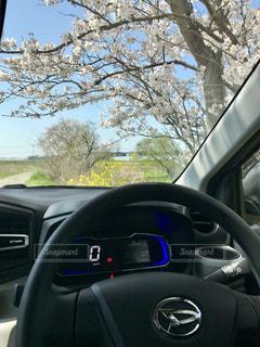 春,桜,サクラ,ドライブ,久留米