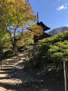 秋の寺の写真・画像素材[1623314]