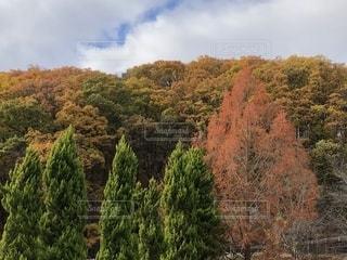 山の秋の写真・画像素材[1629420]