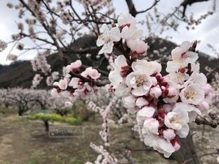 期待膨らむ春の写真・画像素材[2015043]