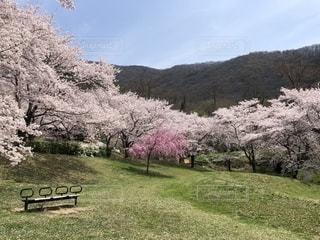 公園でお花見ランチの写真・画像素材[2048598]