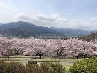 街を見下ろす丘でお花見の写真・画像素材[2048728]