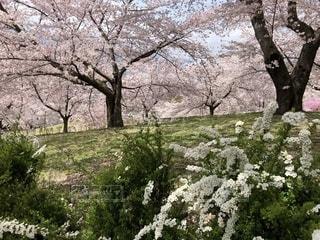 春の丘の写真・画像素材[2050601]