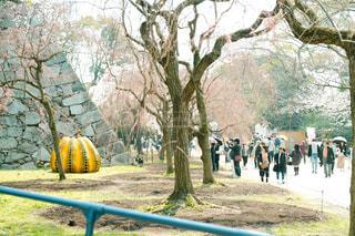 花,桜,福岡,舞鶴公園
