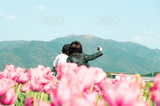 花,チューリップ,福岡