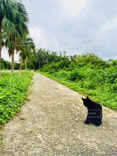 猫,動物,屋外,南国,島,後ろ姿,沖縄,ねこ,道,後姿,野良猫,竹富島,黒猫,ノラ猫,離島,ネコ