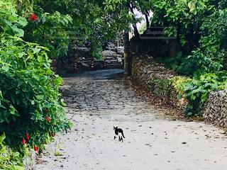 猫,動物,屋外,緑,南国,島,後ろ姿,散歩,沖縄,ねこ,道,旅行,旅,野良猫,さんぽ,バカンス,竹富島,のんびり,ノラ猫,離島,ネコ