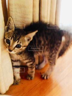 実家の猫の写真・画像素材[2304989]