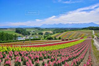 彩るお花畑の絶景の写真・画像素材[1133572]