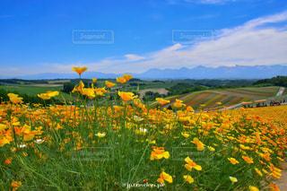 黄色いお花と青空の写真・画像素材[1134655]