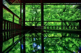 新緑のリフレクションの写真・画像素材[1158764]