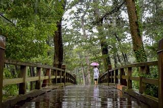 自然,雨,傘,景色,旅行,Snapmart,梅雨,静岡,沼津,コンテスト,写真素材,フォトコンテスト,沼津御用邸