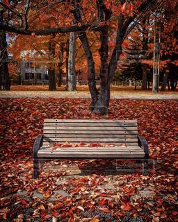 自然,紅葉,ベンチ,景色,旅行,Snapmart,コンテスト,中島公園,札幌市,写真素材,フォトコンテスト