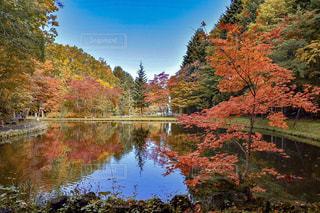 自然,紅葉,景色,旅行,リフレクション,Snapmart,コンテスト,札幌市,写真素材,フォトコンテスト,紅櫻公園